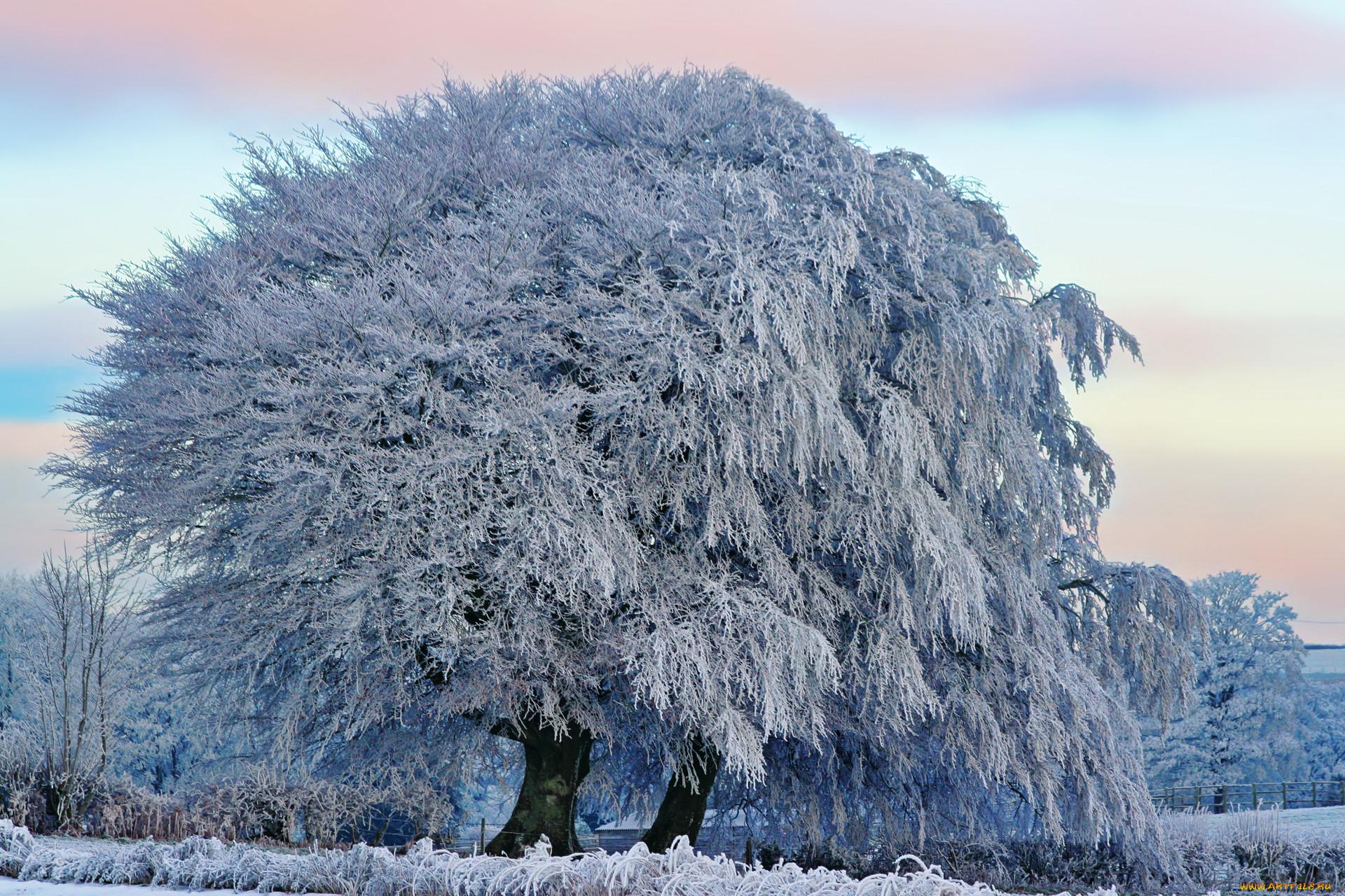 Зима необычные деревья фото